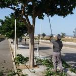 Sfrondatura alberi Via Libero Grassi