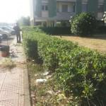 Giardini villaggio verde