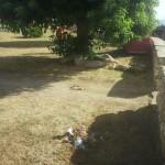 pulizia parco balai 2