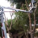 potatura alberi p.za Marconi